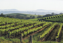 Hunter Valley - Vineyards